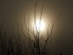 Sunrise through fog.JPG